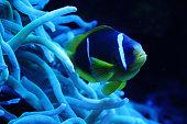 Underwater coral reef in red sea