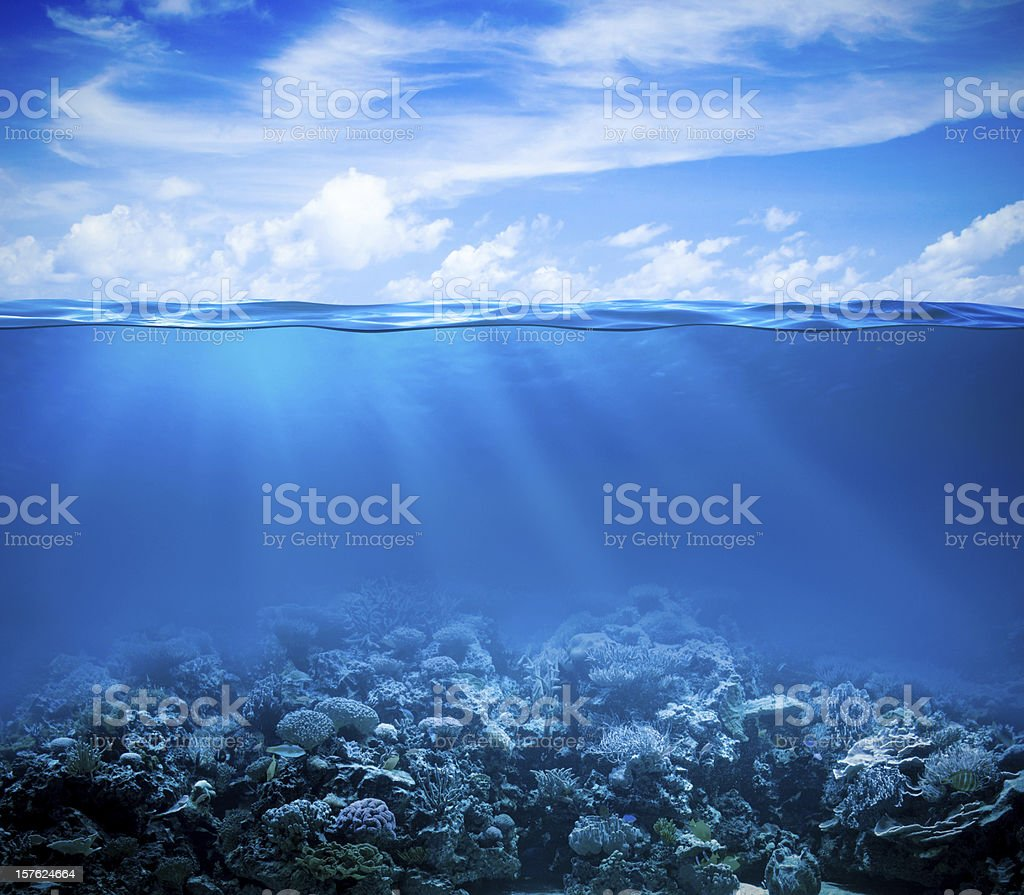 Underwater coral reef seabed view with horizon and water surface stock photo