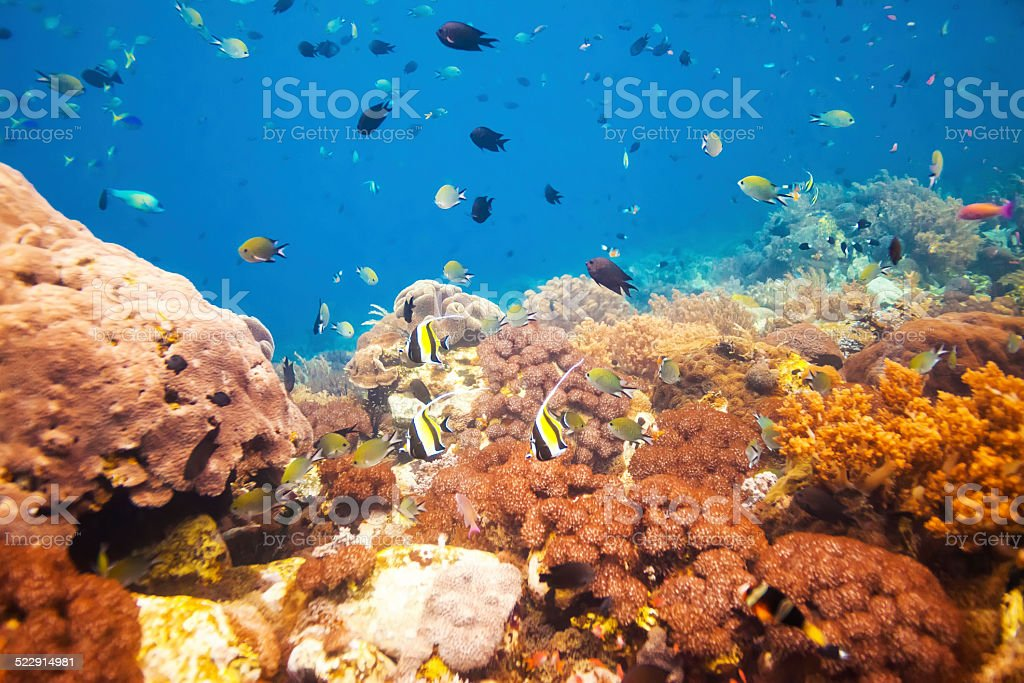 Underwater coral reef with an abundance of fish stock photo