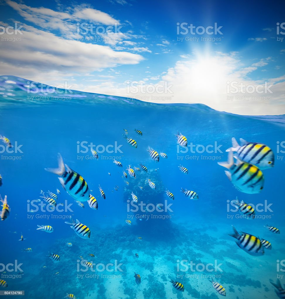 Underwater coral reef with horizon and water waves stock photo
