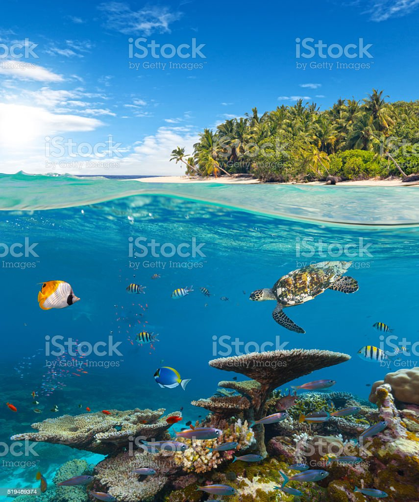 Underwater coral reef with tropical island stock photo
