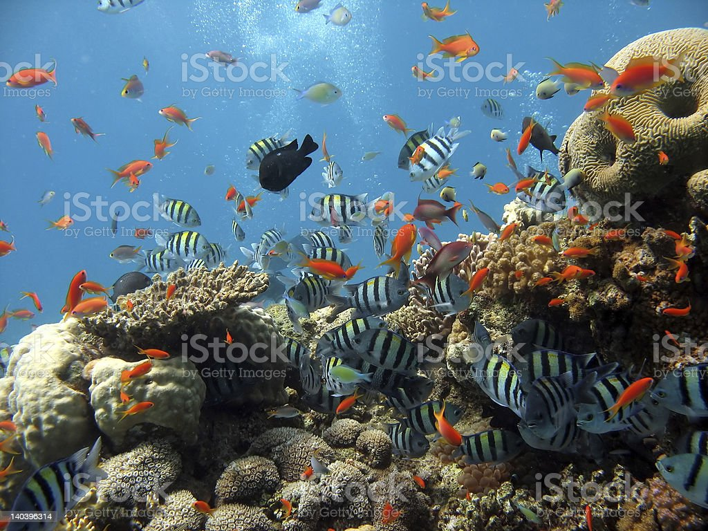 Underwater coral scene with colorful fish stock photo
