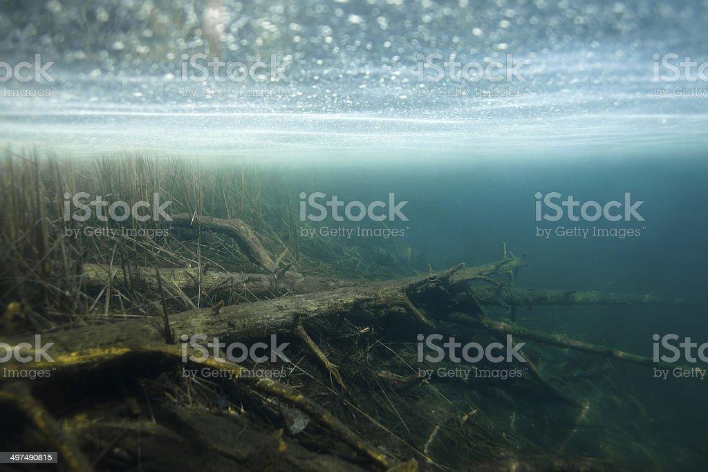 underwater danger stock photo
