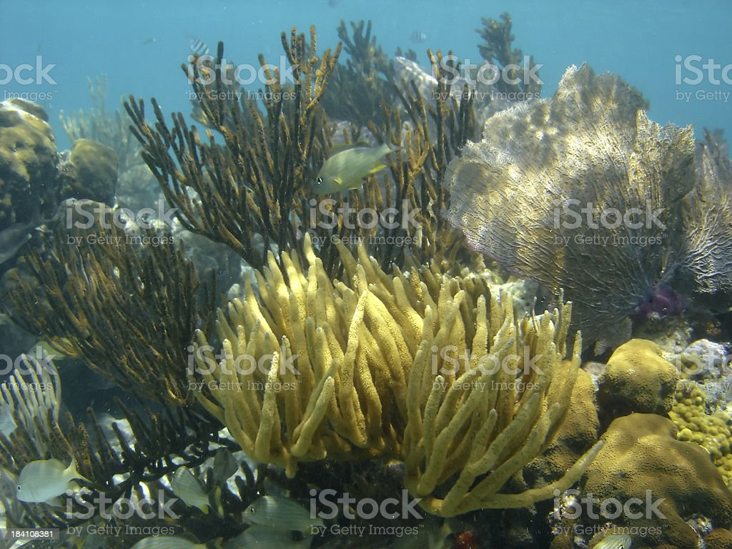 Underwater Diving stock photo