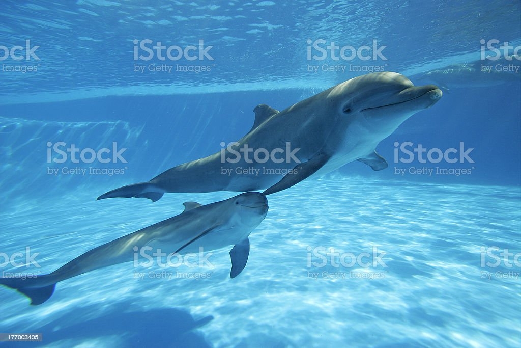 underwater dolphin stock photo