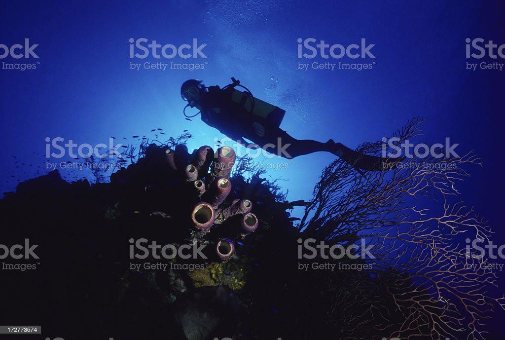 Underwater Exploration royalty-free stock photo