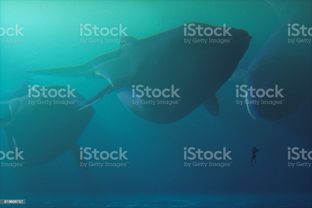 Underwater fantasy whales swimming with woman stock photo