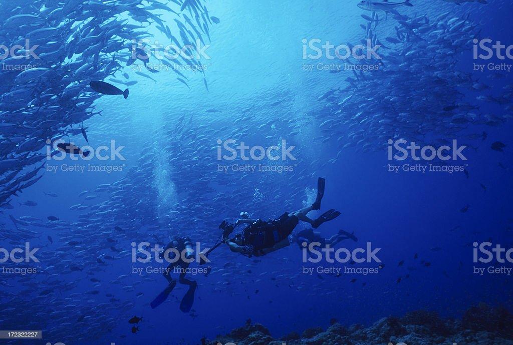 Underwater Fish Circus royalty-free stock photo