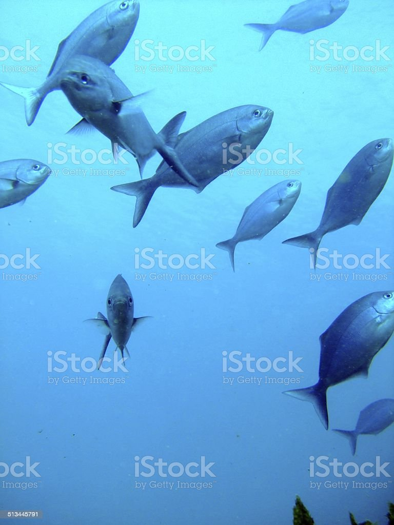 水中の魚 ロイヤリティフリーストックフォト