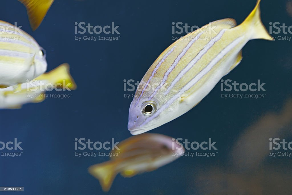 Underwater fishes swimming stock photo