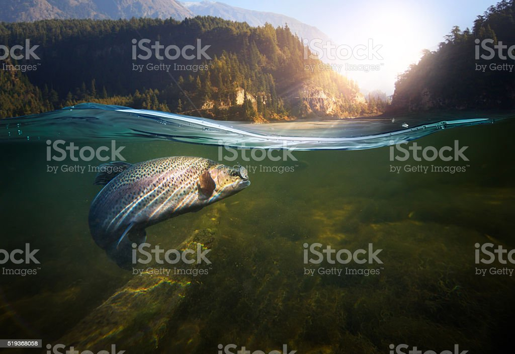 underwater fishing stock photo