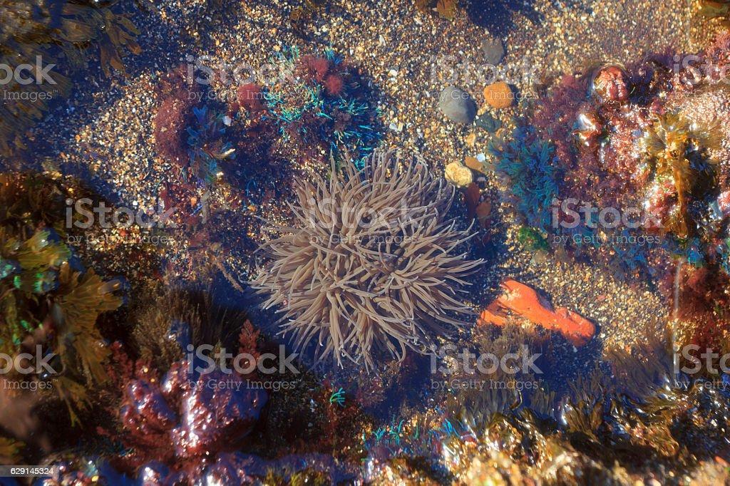 Underwater flora stock photo