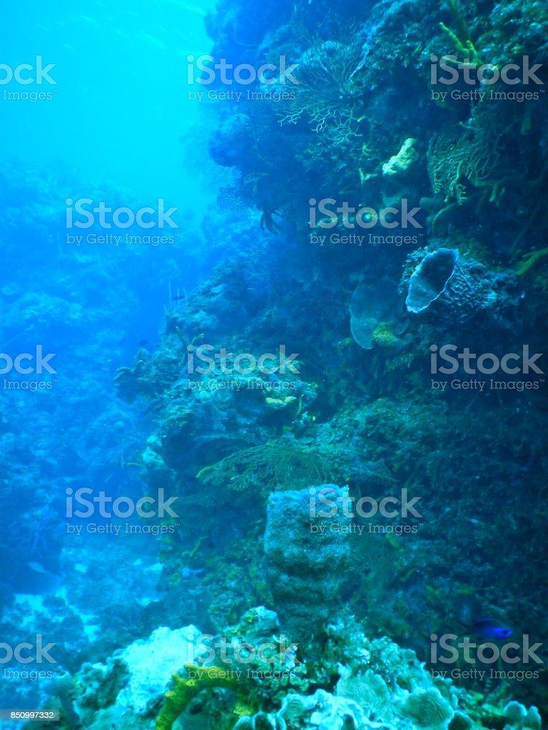Underwater garden along the Riviera Maya, Mexico stock photo