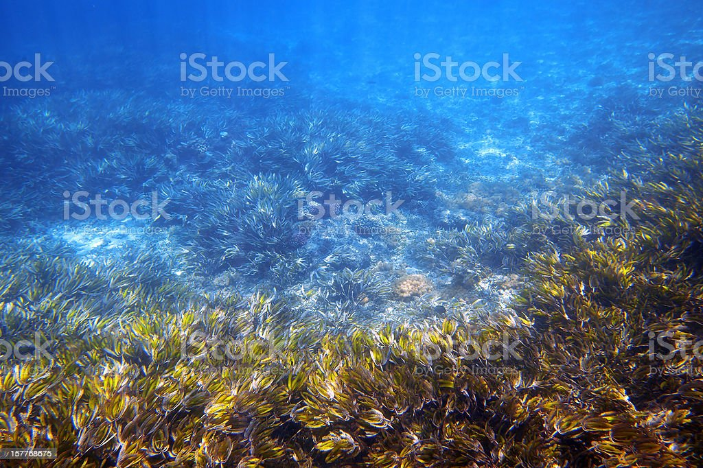 Underwater garden royalty-free stock photo