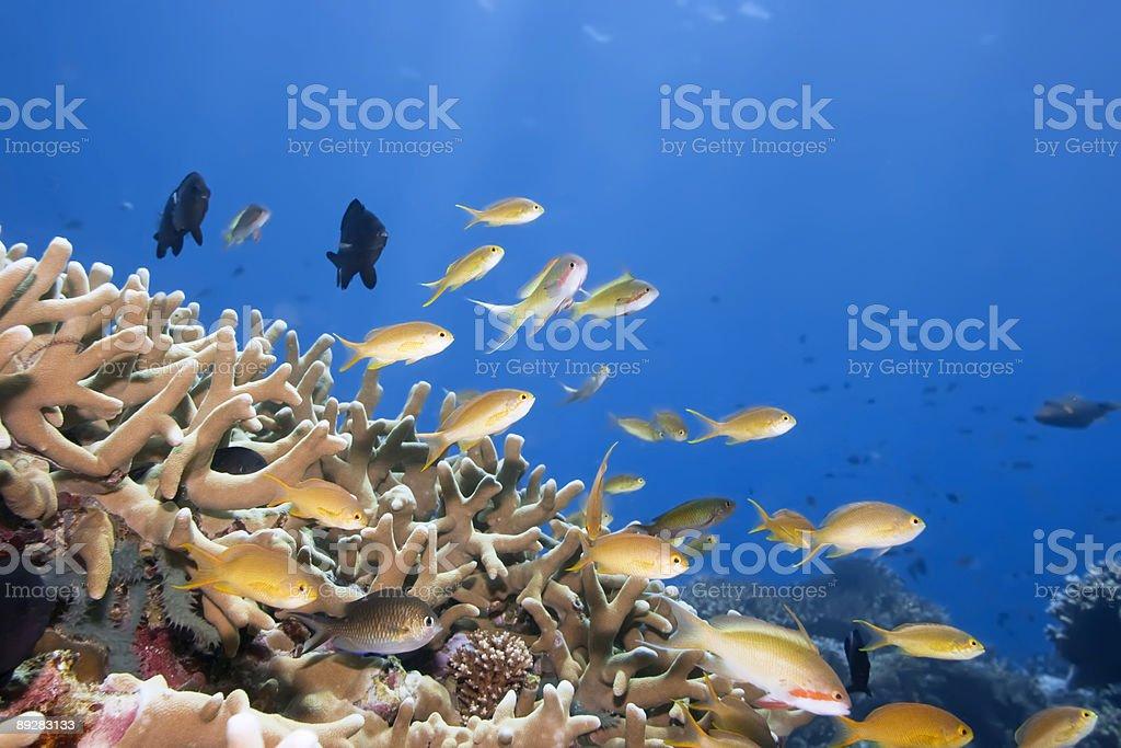 Underwater landscape royalty-free stock photo