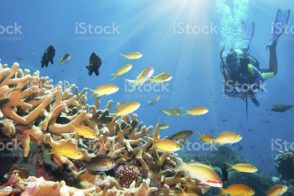 Underwater landscape royalty-free stock photo