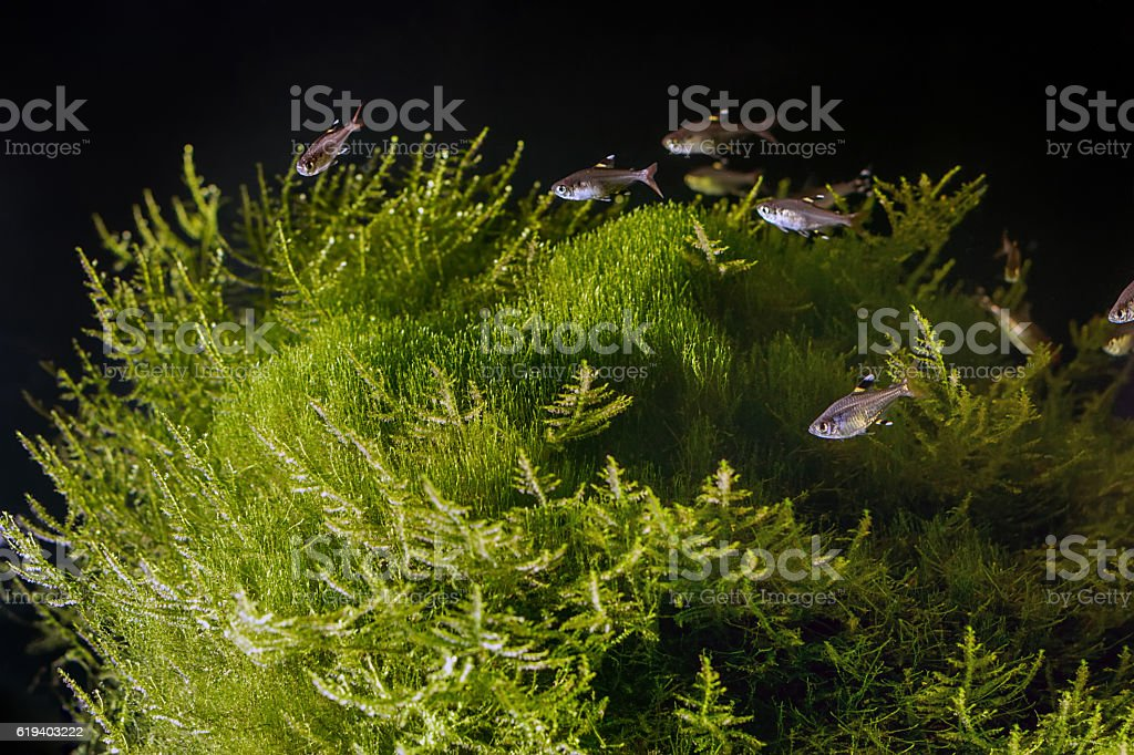 Underwater landscape. Planted tropical freshwater aquarium with stock photo