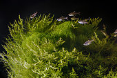 Underwater landscape. Planted tropical freshwater aquarium with