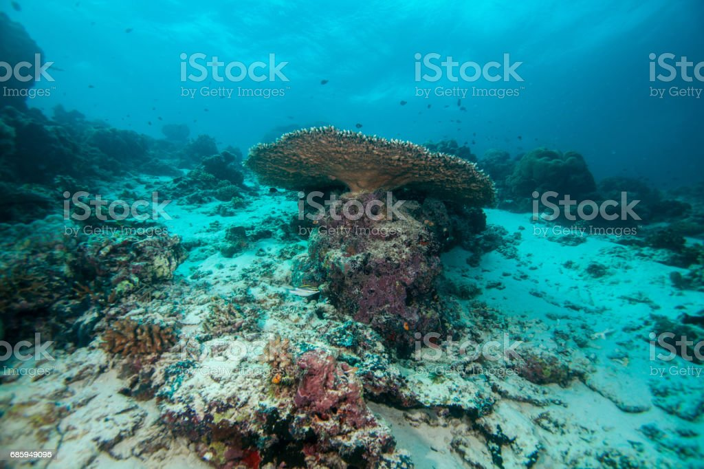 Underwater landscape. Sipadan island. Celebes sea. Malaysia. stock photo