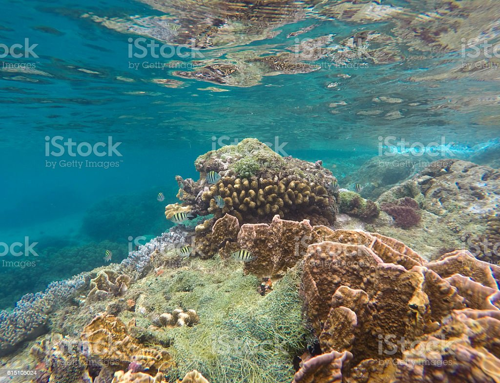 Underwater landscape with coral reef stock photo