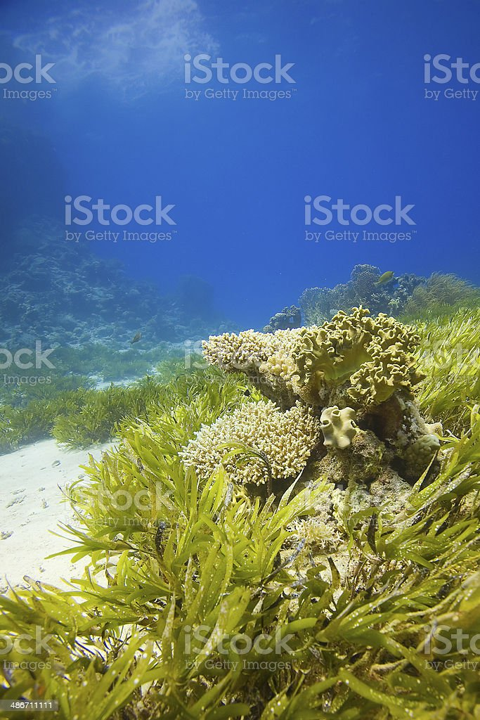 Underwater Landscape,The Red Sea, Egypt stock photo