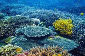 Underwater life in the tropics