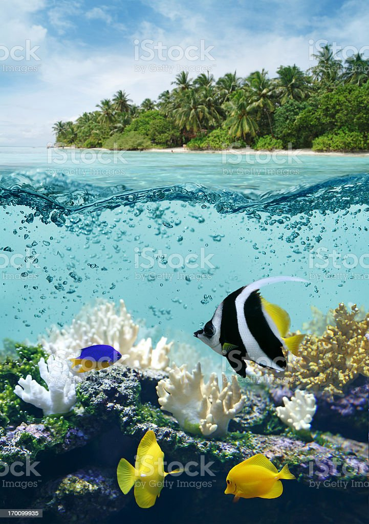 Underwater life in tropical sea royalty-free stock photo