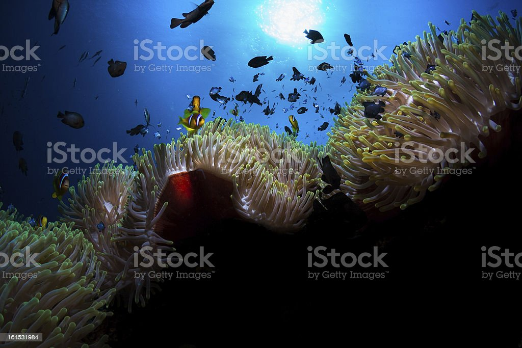 Underwater Life royalty-free stock photo