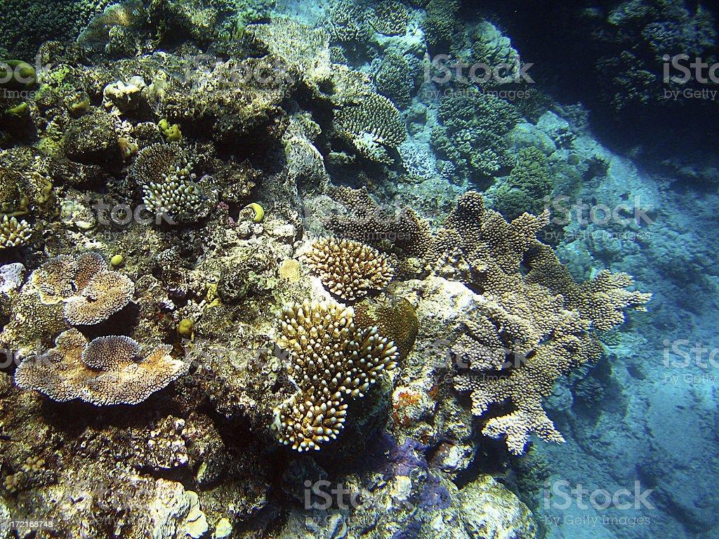 underwater marvels royalty-free stock photo