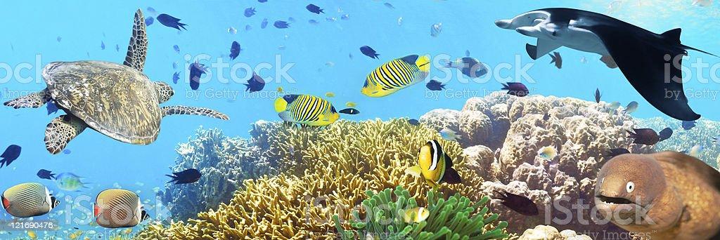 Underwater panorama stock photo