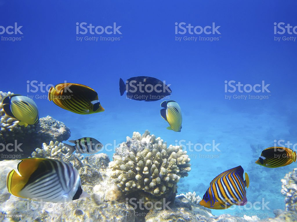 Underwater photo of a hard-coral reef royalty-free stock photo