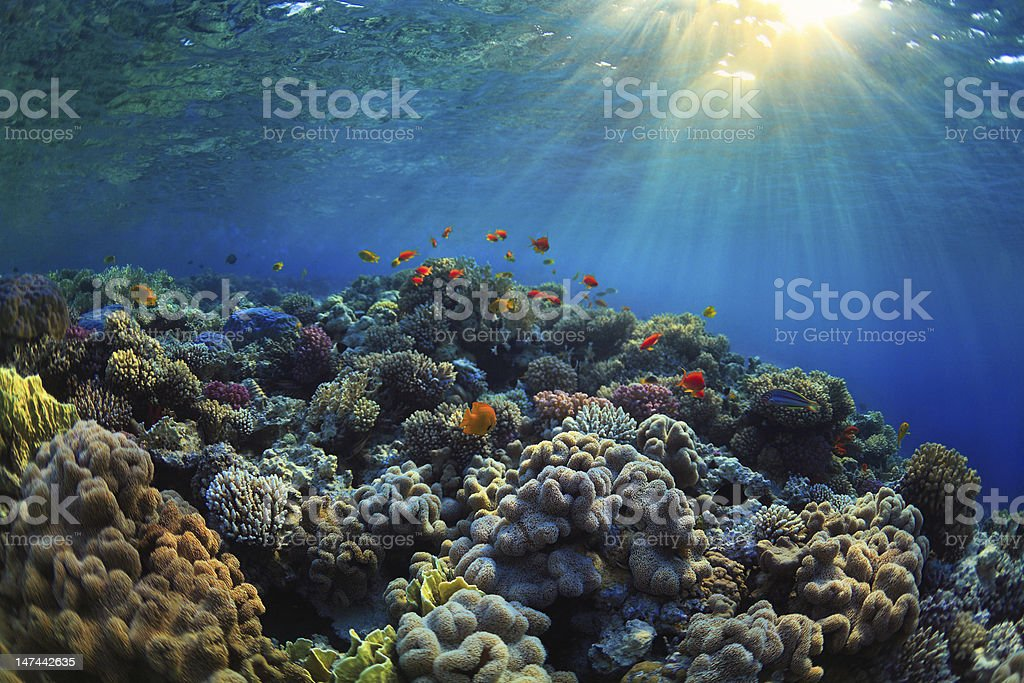 Underwater photo of a vibrant coral reef stock photo