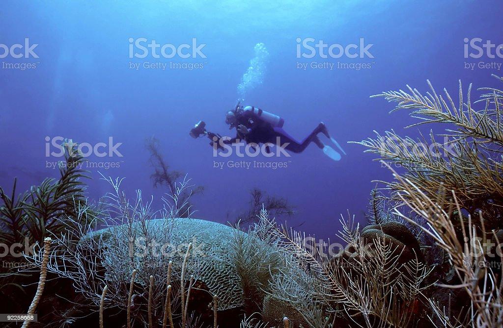 Underwater photographer crusing royalty-free stock photo