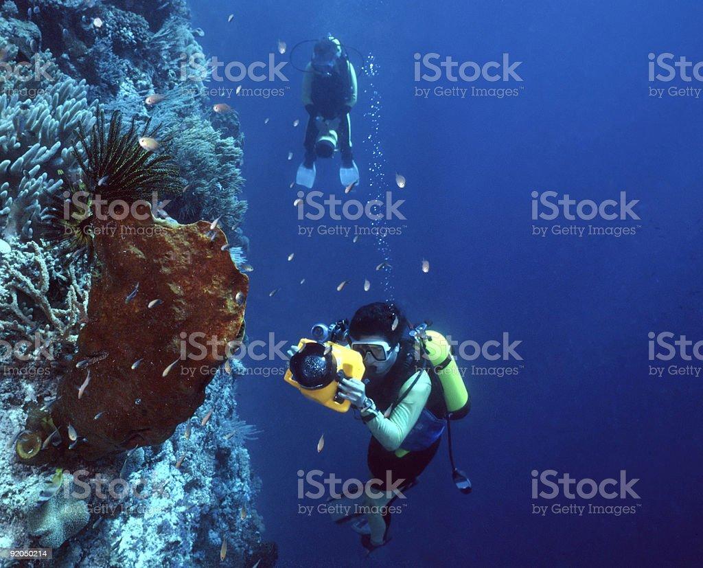 Photographe sous-marin en Indonésie photo libre de droits