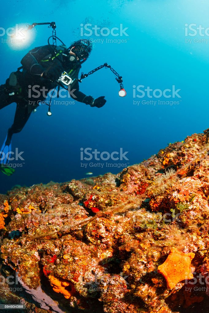 Underwater photographer  Scuba divers photographing  coral reef   Sea life Starfish stock photo