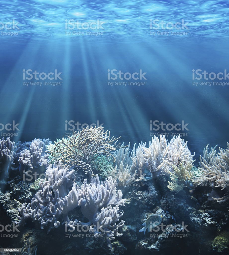 Underwater stock photo