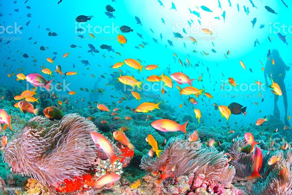 Debaixo de água foto de stock royalty-free