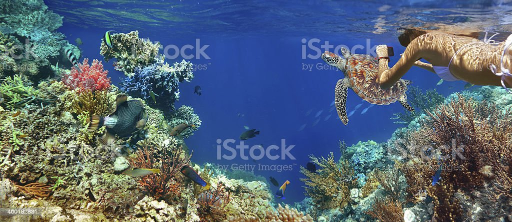 Underwater picture of colorful coral, sea life and woman stock photo