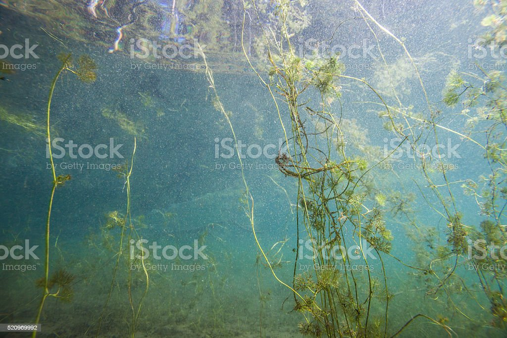 Underwater plants in a finnish lake stock photo