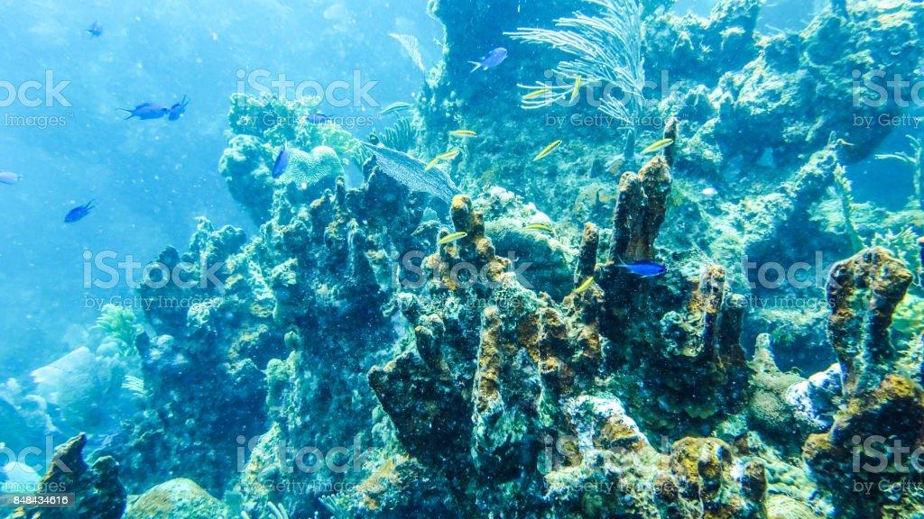 Underwater Reef in the Bahamas stock photo