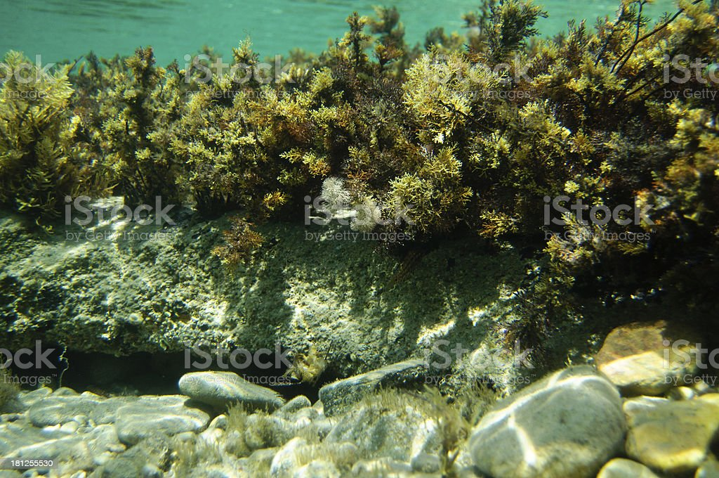 Underwater reef with various plants royalty-free stock photo