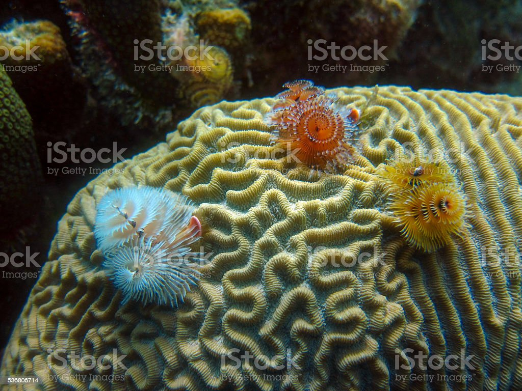 Underwater Scene in Bonaire stock photo