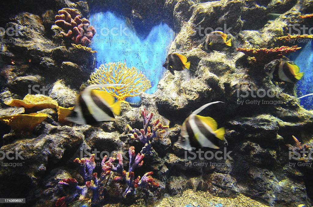 Underwater scene in the sea with colourful fish , royalty-free stock photo