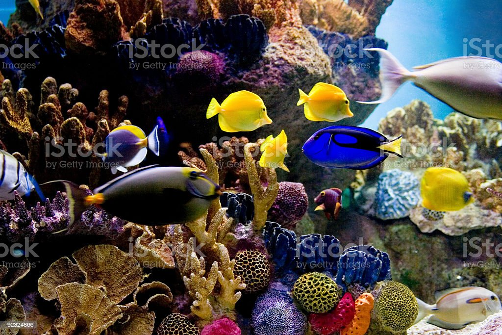 Underwater scene of bright colored tropical fish royalty-free stock photo