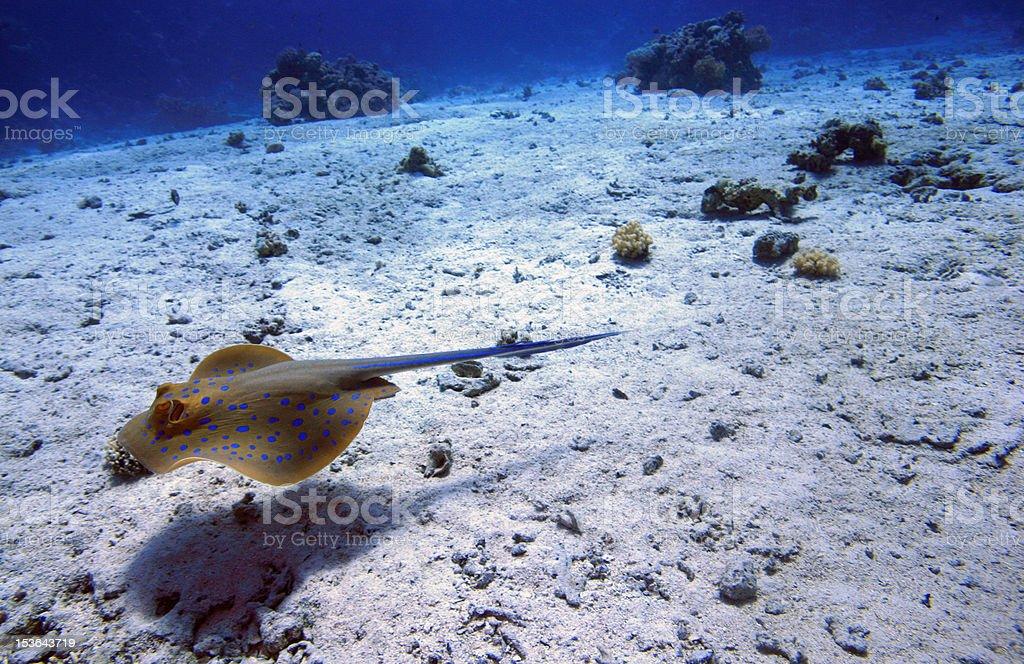 underwater scene royalty-free stock photo