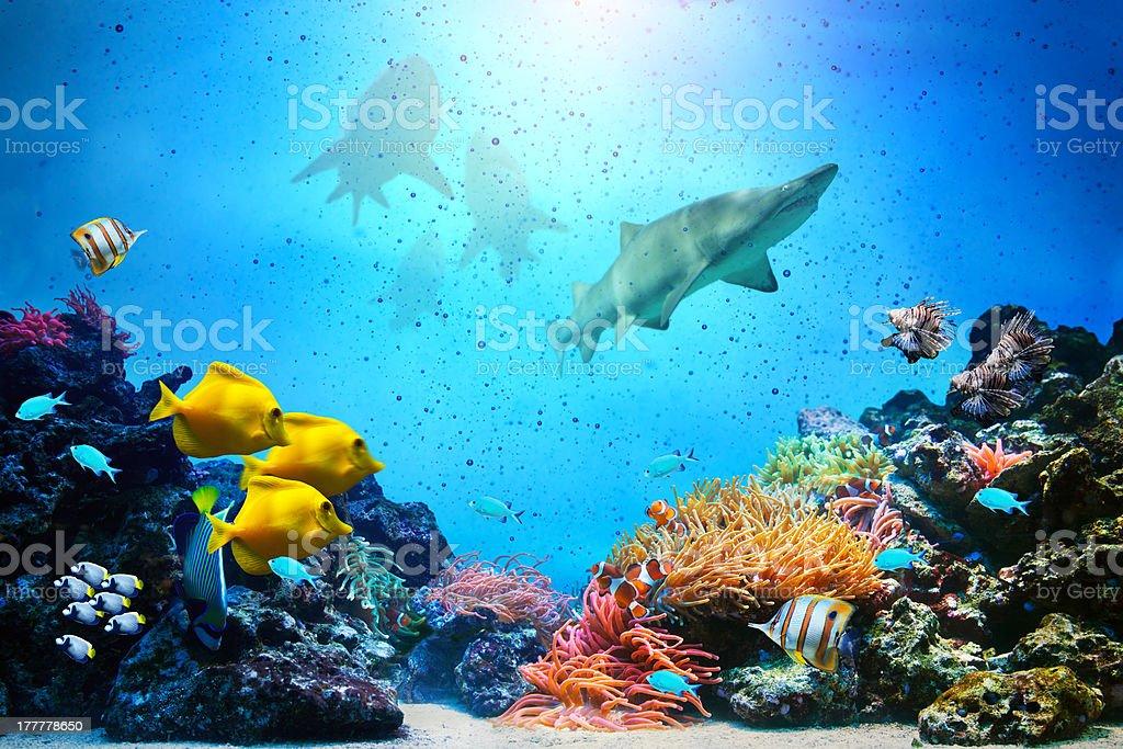 Underwater scene. stock photo