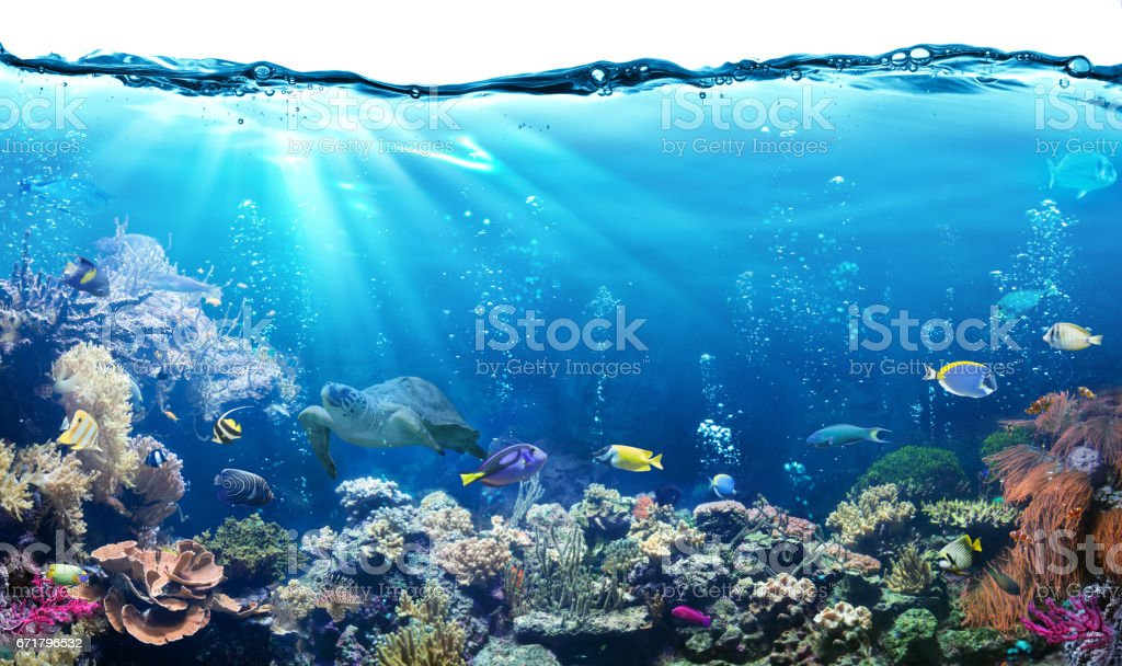 Underwater Scene With Reef And Tropical Fish stock photo