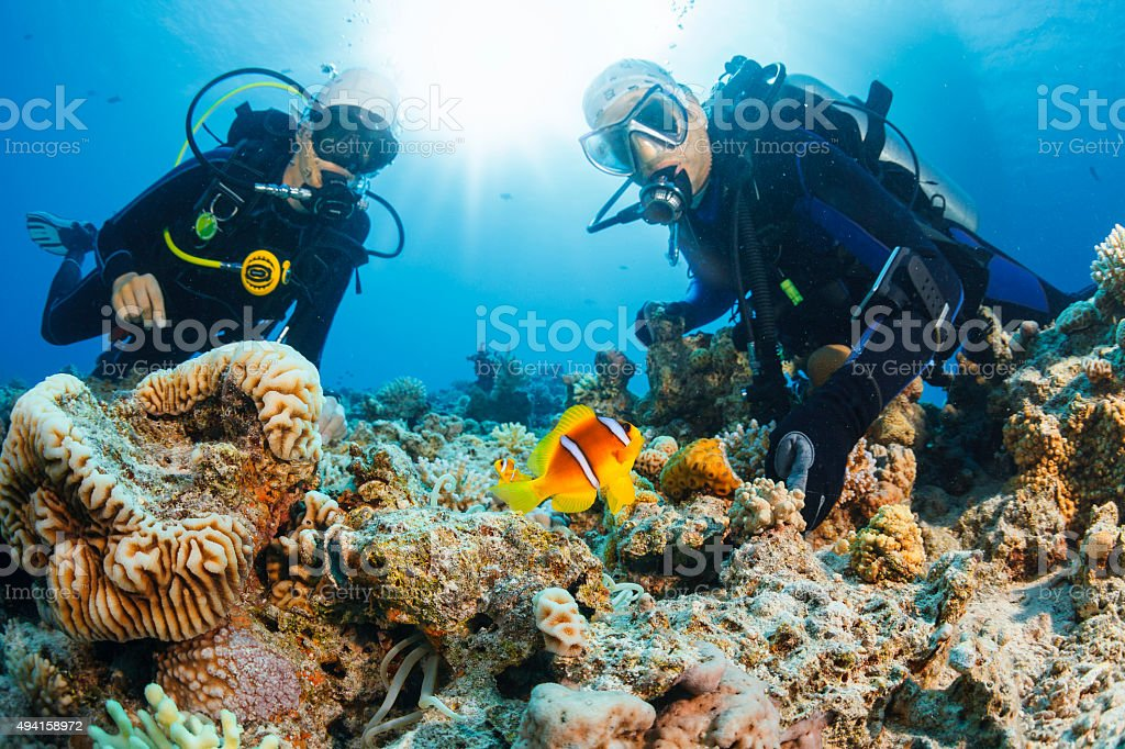 Underwater scene with scuba divers coral and anemone  clownfish stock photo