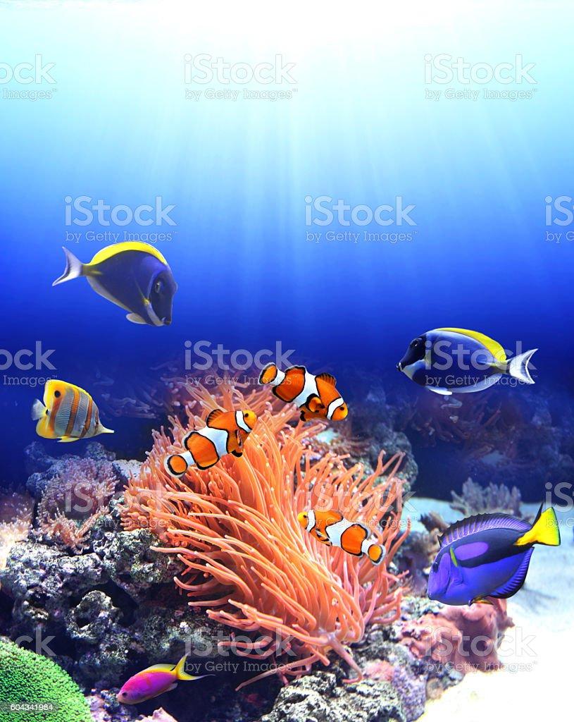 Underwater scene with tropical fish stock photo