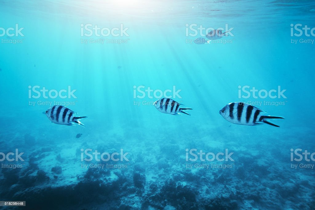 Underwater Scene With Tropical Fishes stock photo